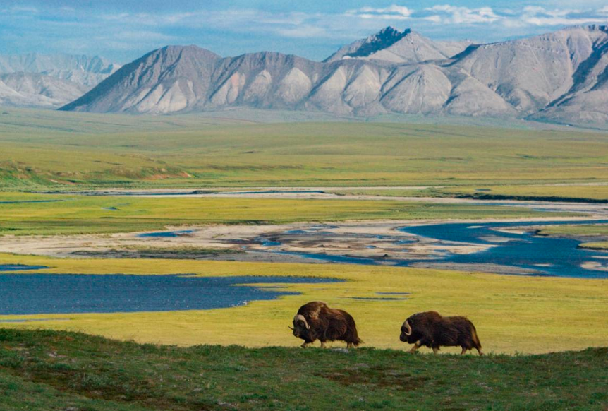 Protests Against Drilling in ANWR Dominate Public Meeting