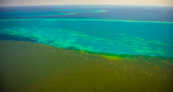 Great Barrier Reef May Get Slimed With Sludge