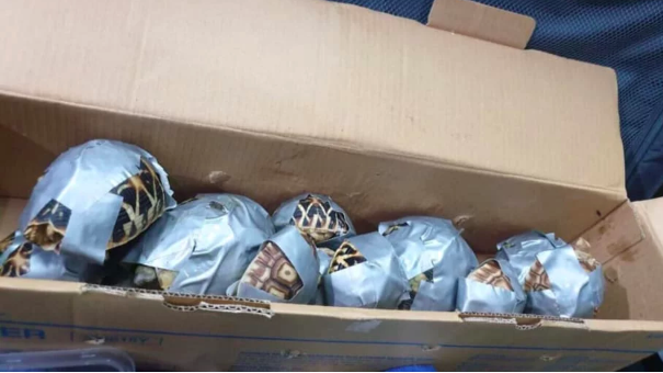 Duct Taped Turtles Turn Up In Luggage – Abandoned by Smugglers