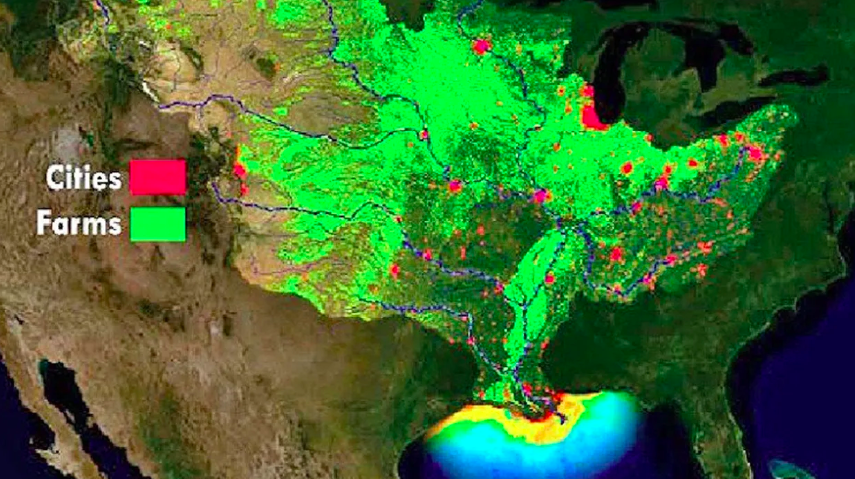 Experts Predict Huge Dead Zone in Gulf of Mexico this Summer