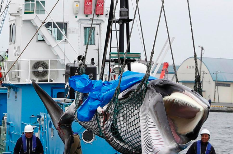 Japan Resumes Commercial Whaling, Joins Iceland and Norway