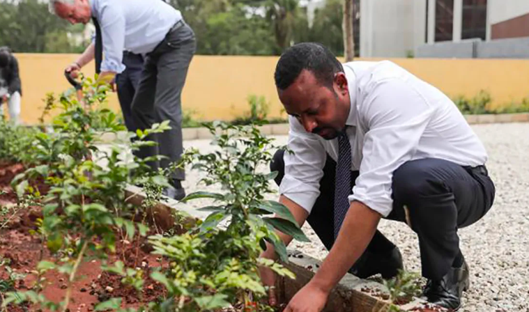 Ethiopia's Green Legacy – Hundreds of Millions of New Trees Planted