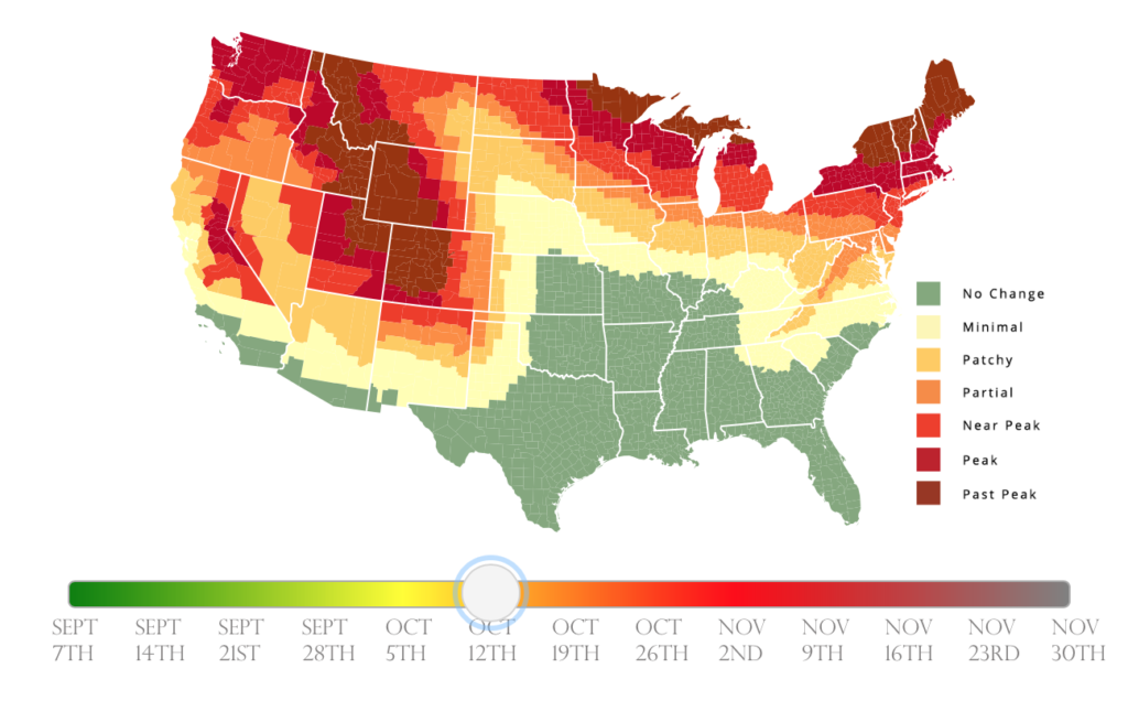One Cool Thing: Fall Foliage Predictions