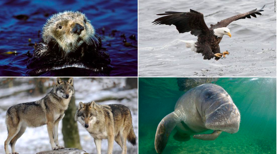 The Endangered Species Act Is Now the One That Is Endangered