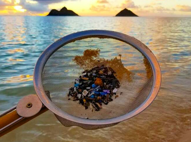 Beach Clean Ups Sweeping Hawai'i