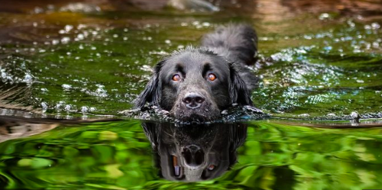 One Important Dog Safety Thing:  Toxic Algae Could Poison Them