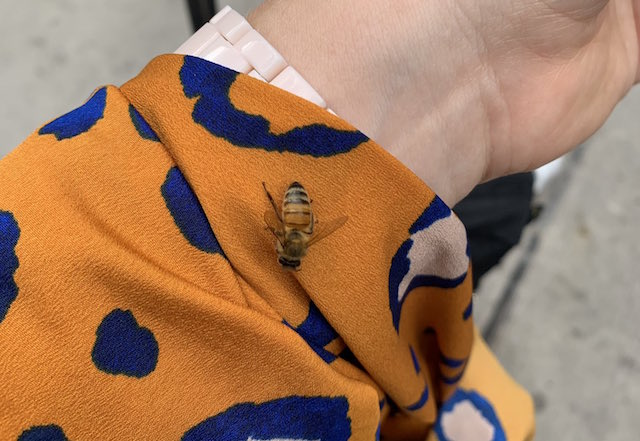 One Bee Thing: Prints Pollinators Are Loving This Fall