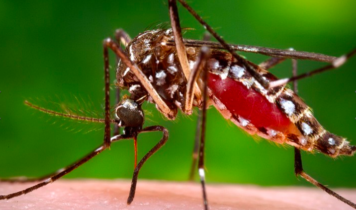 Surge In Dangerous Viruses Spread by Mosquitos, Climate Change May Be Why