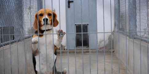 House Passes Bill Making Animal Cruelty a Felony but Agencies Still Doing Testing on Animals
