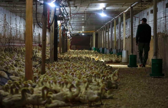 New York To Bid Foie Gras Adieu