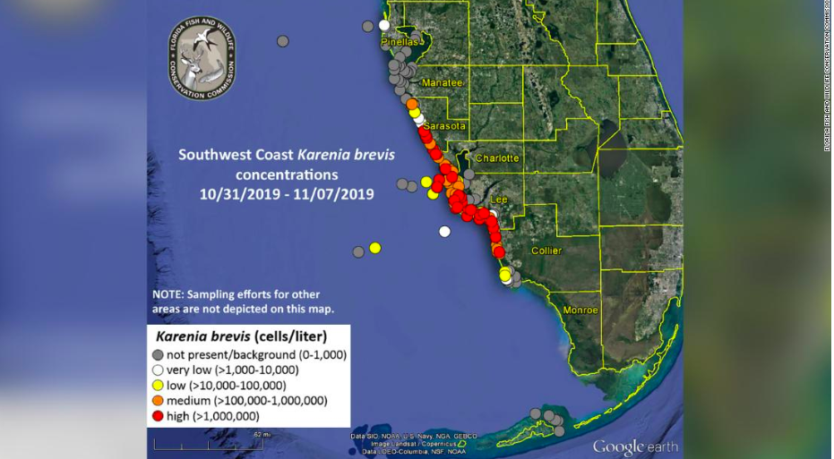 Red Tide Rolls Into Florida Again