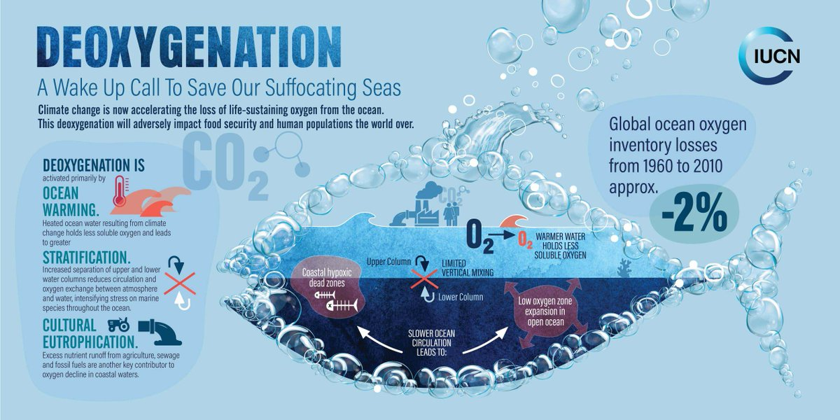 Our Oceans Are Suffocating
