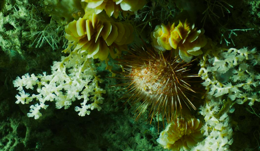 Northeast (NE) Canyons and Seamounts Monument Designation Stands