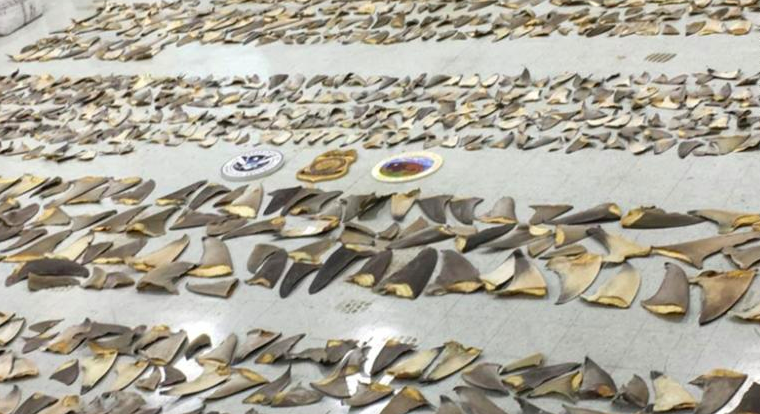 $1M In Illegal Shark Fins Seized in Miami