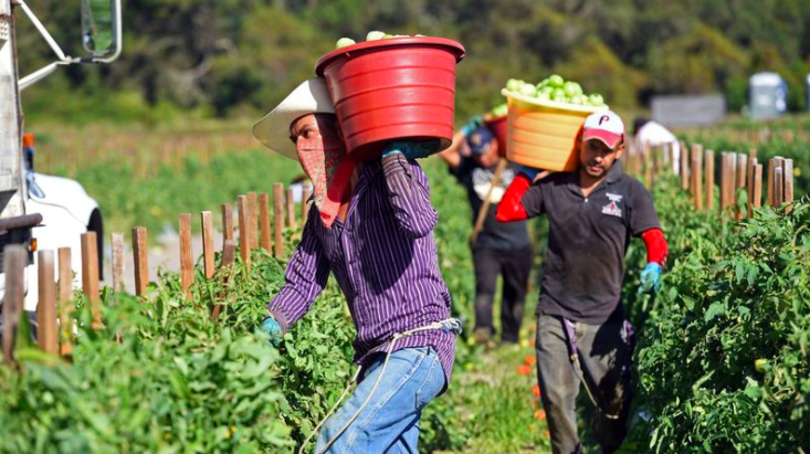 Farms Face Challenges Getting and Protecting Workers During The Pandemic