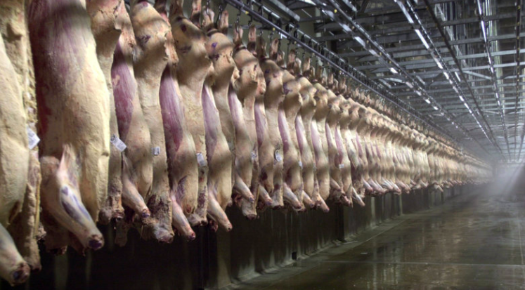 Animal Farm:  COVID Crisis Slaughtering the Meat Industry