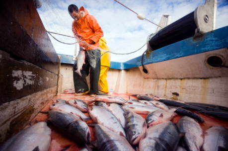 Alaska Confronts COVID: State May Close Salmon Season Just as Energy Projects Lose Funding