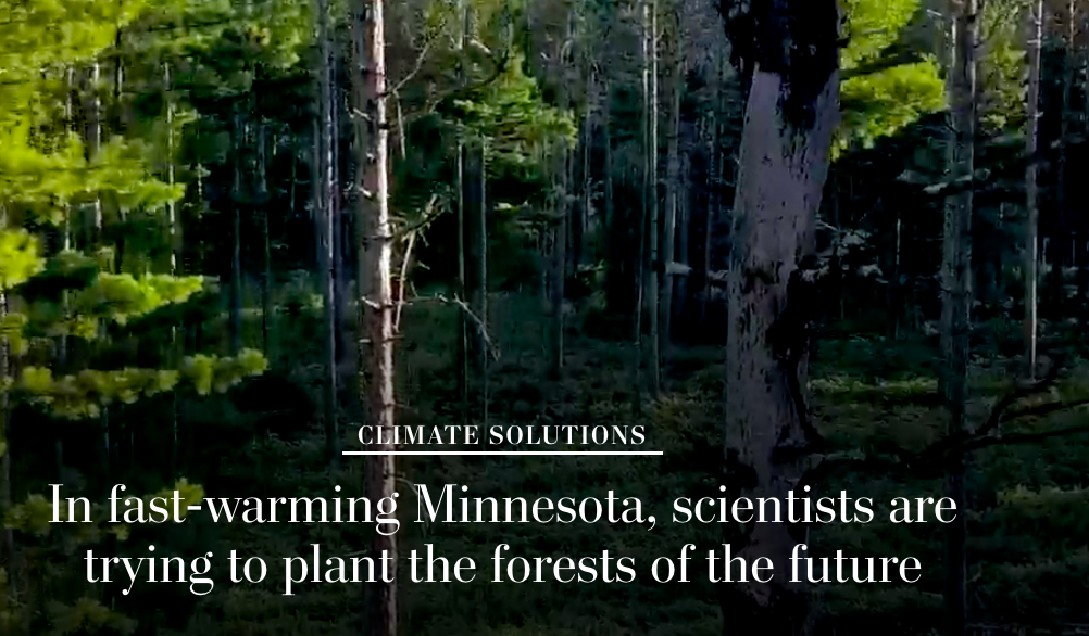 Saving Northern Minnesota's Forests Through Affirmative Adaptation