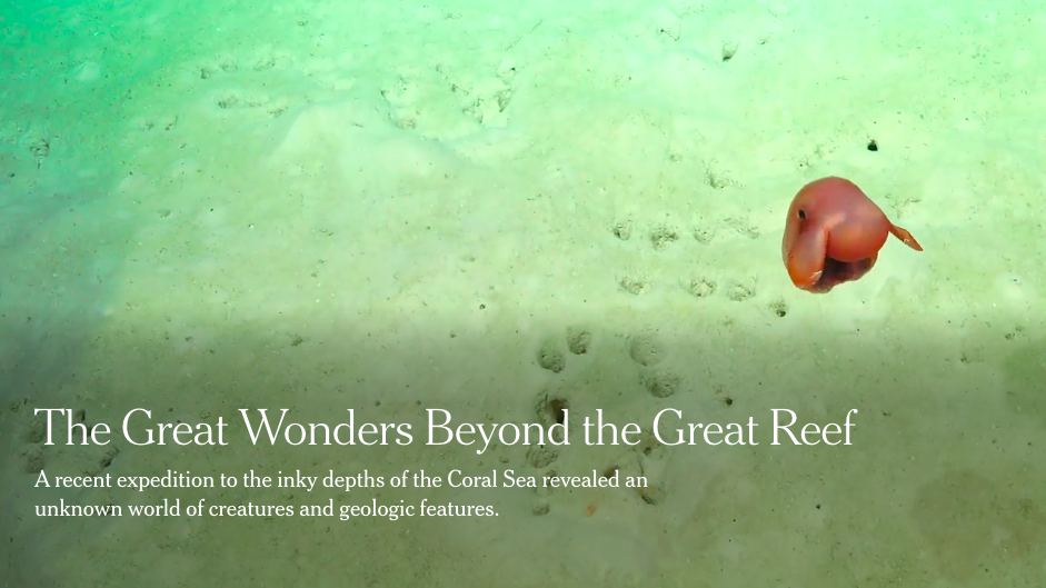 One Working Remotely Thing: The Wonders of The Coral Sea Discovered