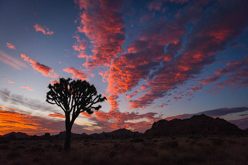 Update: Joshua Tree Petition Granted For One Year While Officials Conduct Study