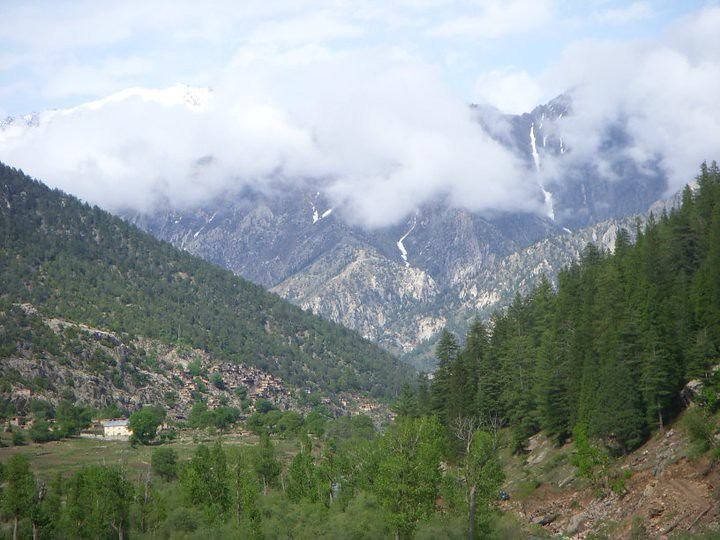 Deforestation in Afghanistan Multiplies Climate and Security Threats