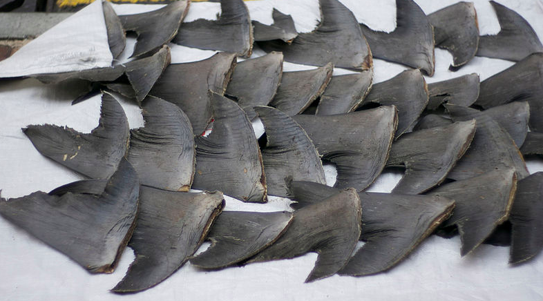 Feds Bust Organized Crime Ring Trading in Shark Fins and Drugs