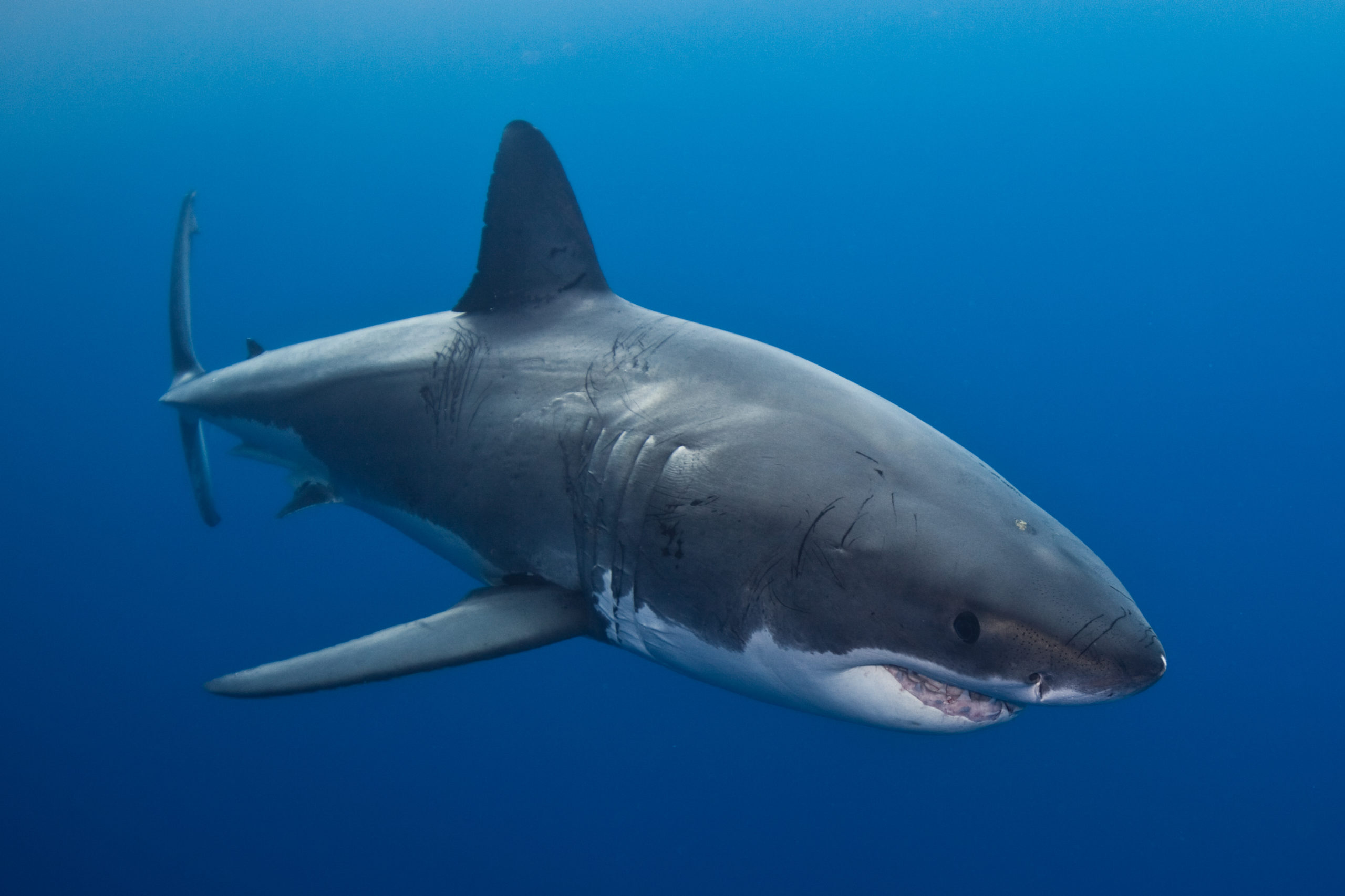 Experts Believe Spike in Shark Attack Deaths May be Caused by Climate Change