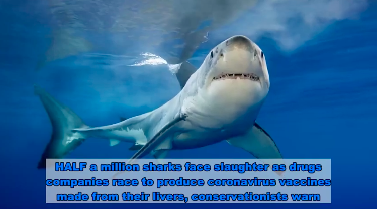 500,000 Sharks May Die to Create COVID Vaccine