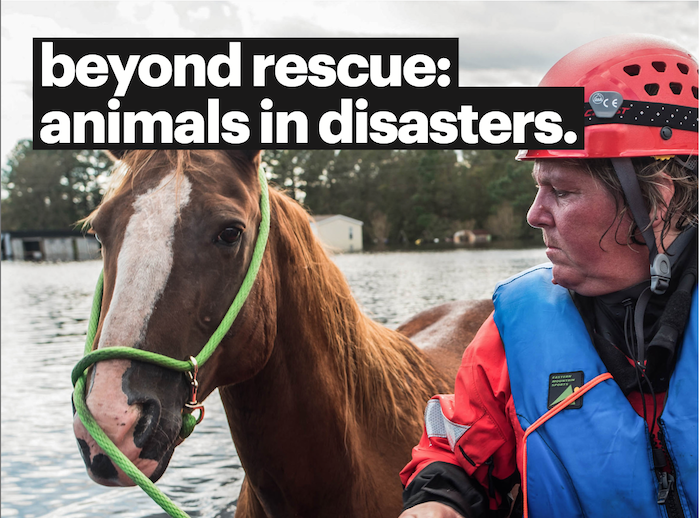 Animals Need a Plan for Natural Disasters Too