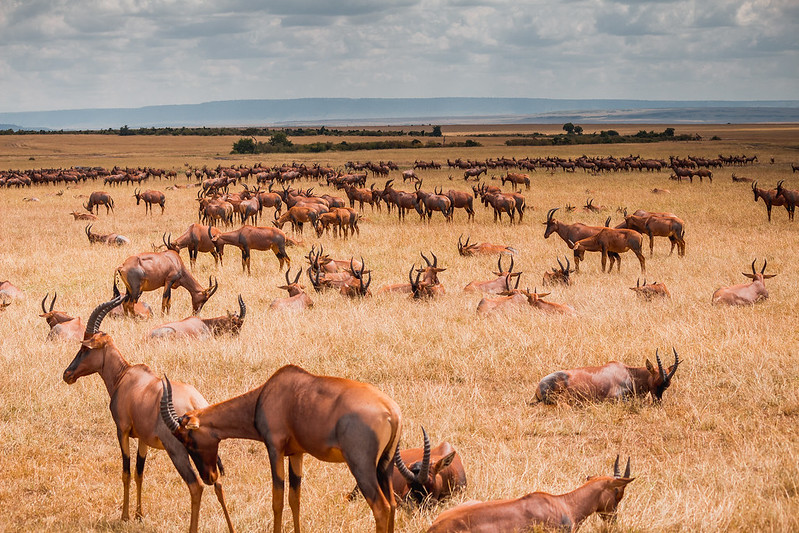 Maasai Mara Conservancies Get Some Relief