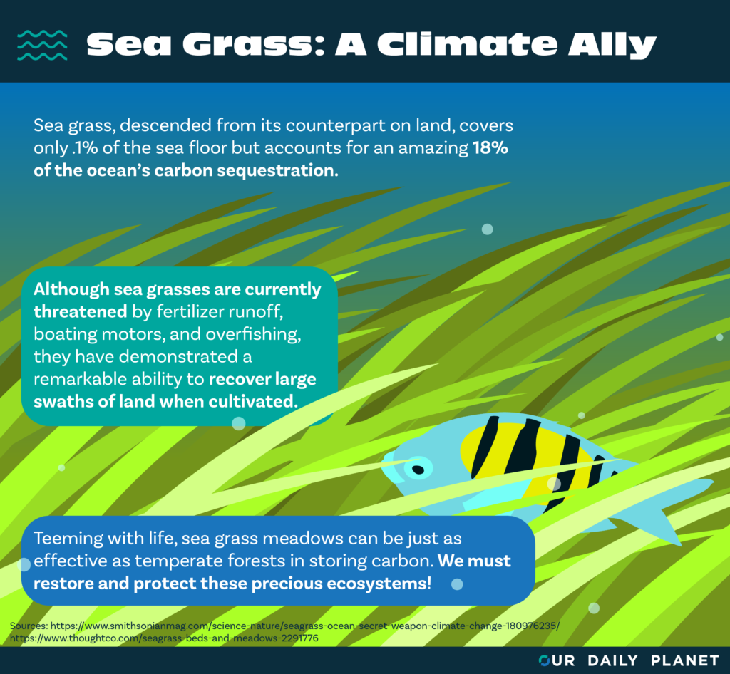 "U.N. Report Calls for Protection of Seagrasses, ""the Forgotten Ecosystem"""