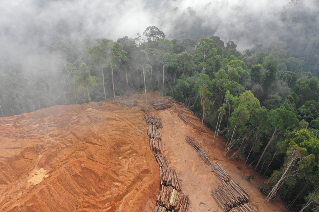 Deforestation Rises in the Amazon