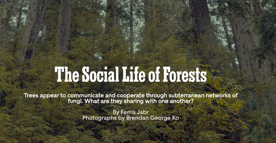 Read This: The NYT on The Secret Life of Trees