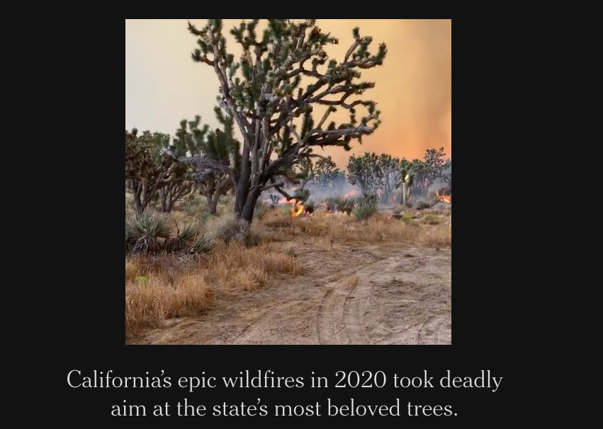 Fires Destroyed Millions of California's Most Iconic Trees