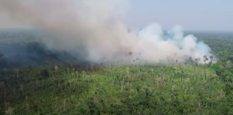 Bolsonaro's Military Strategy Fails to Protect Amazon from Deforestation