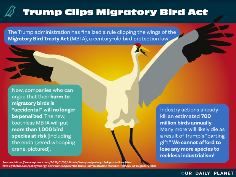 Trump Team Finishes Off Migratory Birds Rollback