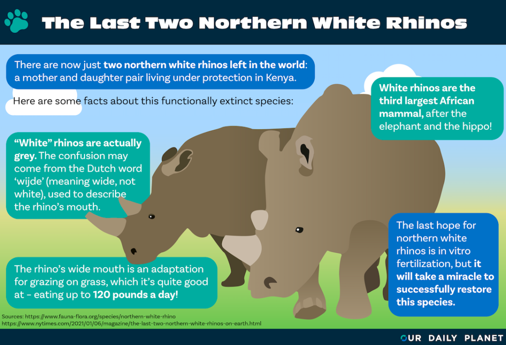 The Lonely Existence of the Last Two Northern White Rhinos