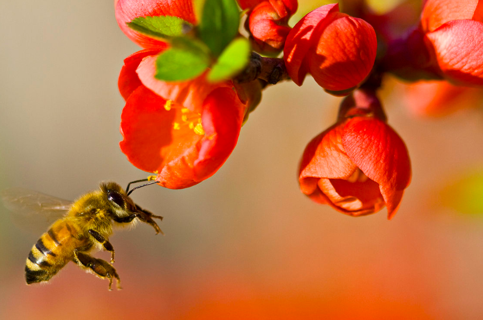 A Common Pesticide Is Making Bees Insomniacs