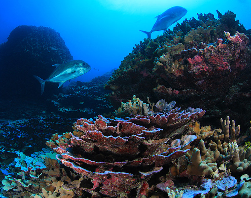 The Presidential Power of Marine National Monuments