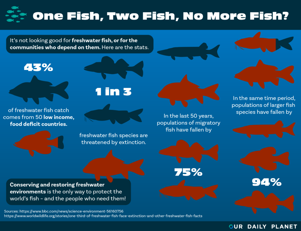 Freshwater Fish in Peril, New WWF Report States