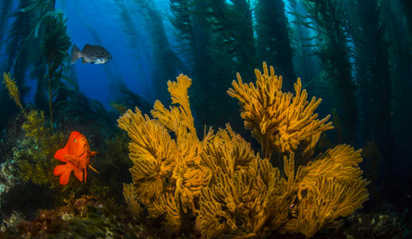New Report Provides Roadmap for Fully Protected Oceans