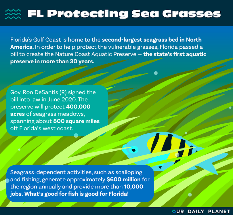 A Florida Seagrass Success Story — For Now