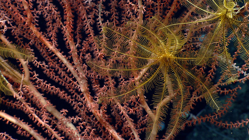 A Sigh of Relief for Northeast Canyons and Seamounts Monument