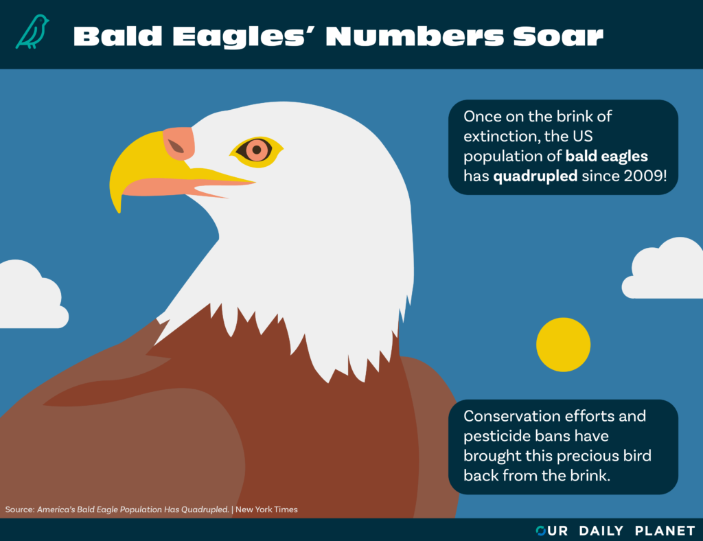 Bald Eagle Numbers Soar Thanks to Endangered Species Act