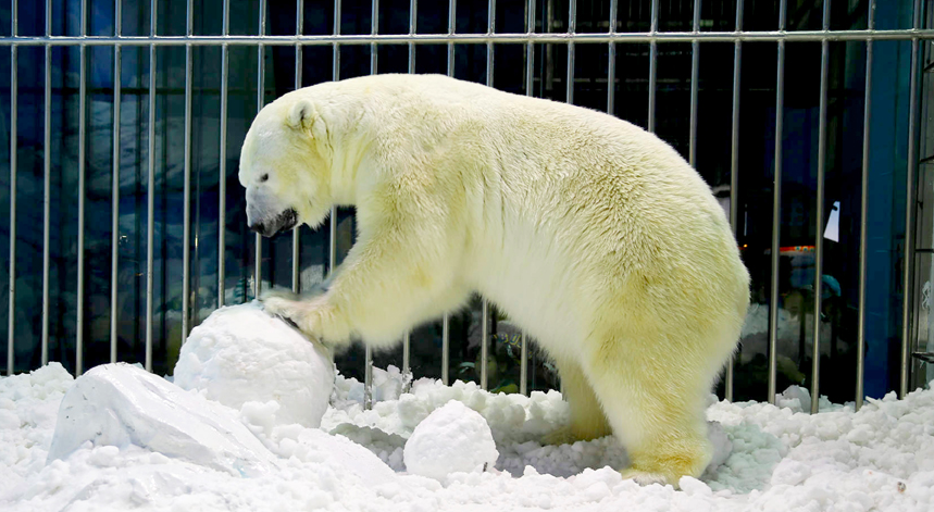 """One Not Cool Thing: A """"Polar Bear Hotel"""" In China"""