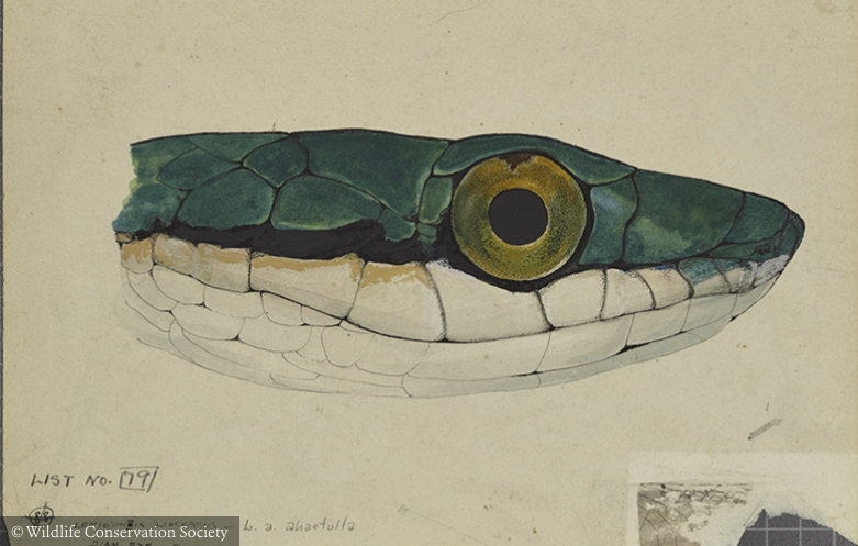 One Cool Thing: 2000 Historical Wildlife Illustrations Now Available