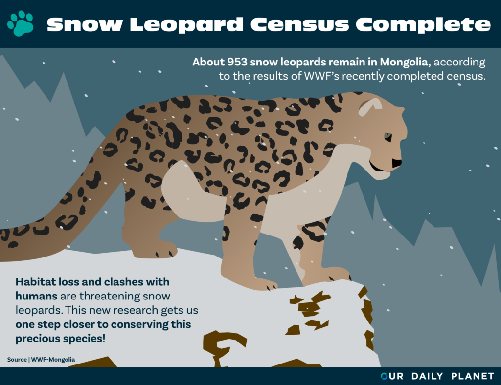 WWF-Mongolia Completes Nationwide Survey of Snow Leopard Population