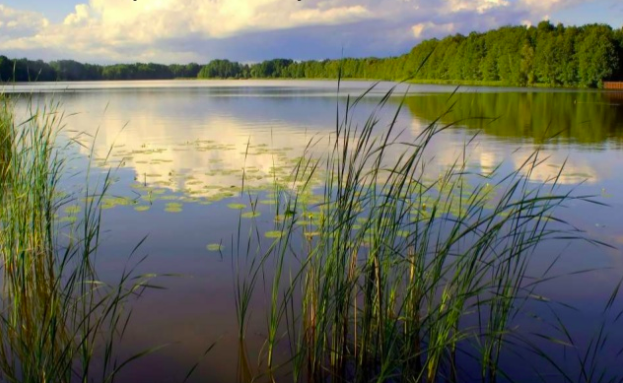Study Finds That Half of All Methane Emissions Come from Aquatic Ecosystems