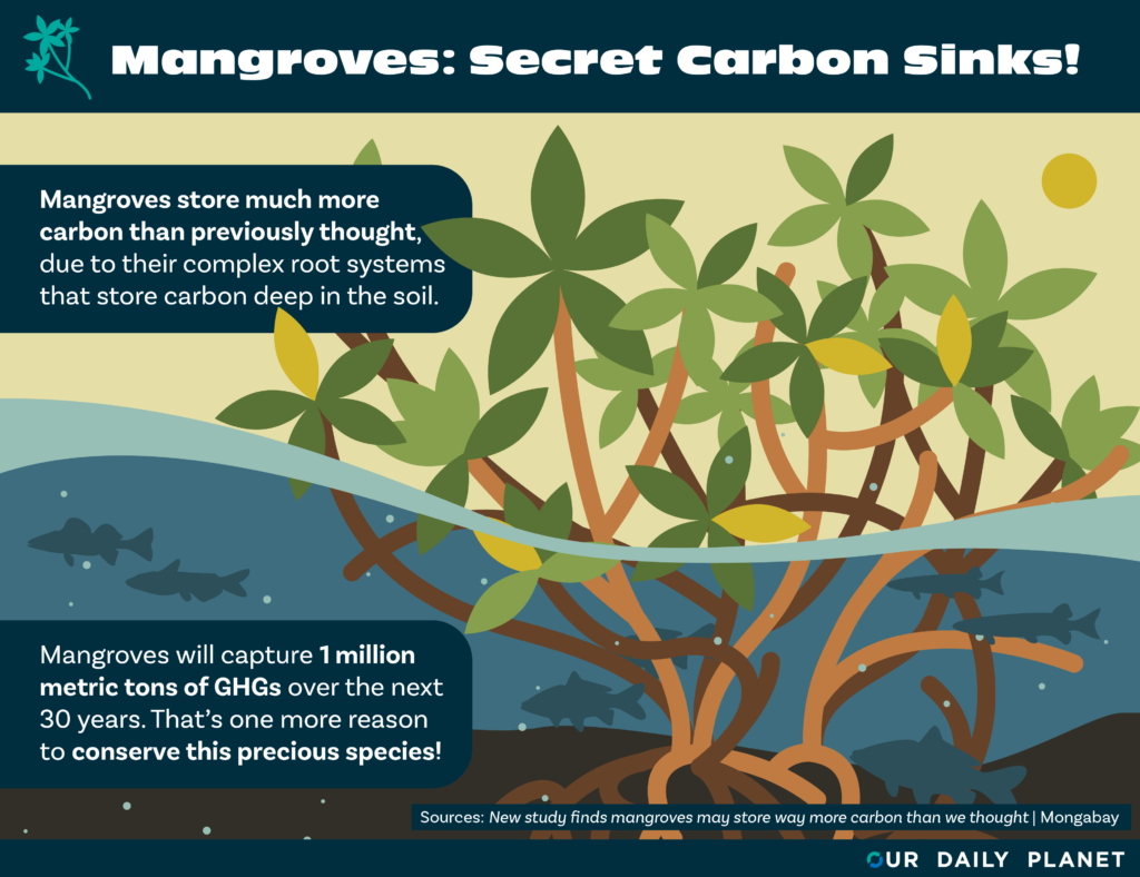 CI, Apple Develop Mangrove Carbon Credits