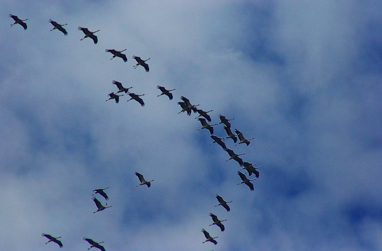 Biden Administration Reverses Trump Rollback of Migratory Bird Treaty Act